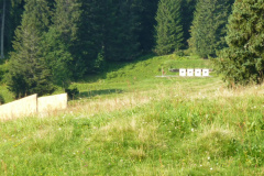 Braunwald13-15